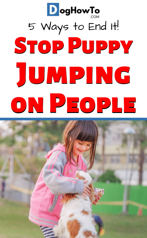 Dog jumping on people? Learn how to stop it now or regret it forever! Find out how to stop your dog from jumping on people now, just by following the 5 easy tips in this article!