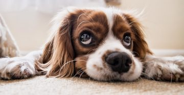 how to stop dog separation anxiety