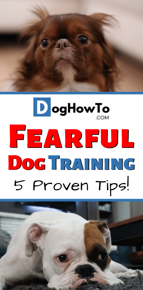 Fearful dog training. Train your dog how to be more confident. 5 proven ways to get your dog to quit being so scared. Teach your dog stop being scared so that they can enjoy life! Find how to get your dog to stop being fearful in this article!