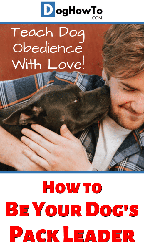 How to be dog's pack leader. Make training your dog more enjoyable and better for the both of you! Teach your dog to be obedient the humane and loving way, just by reading this article!