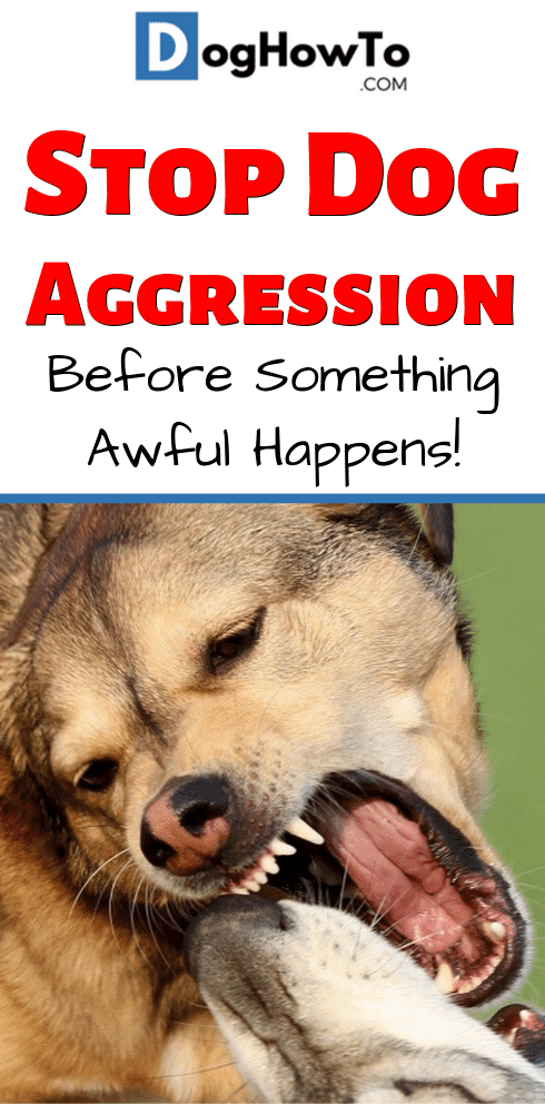 How to stop your dog from being aggressive. Put a stop to it now before it's too late! End the worrying, and find out how to stop dog aggression by reading this article now!