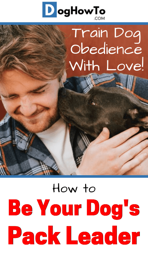 How to train dog to be obedient. Make training more enjoyable and better for both you and your dog! Teach your dog obedience the humane and loving way by reading this article!