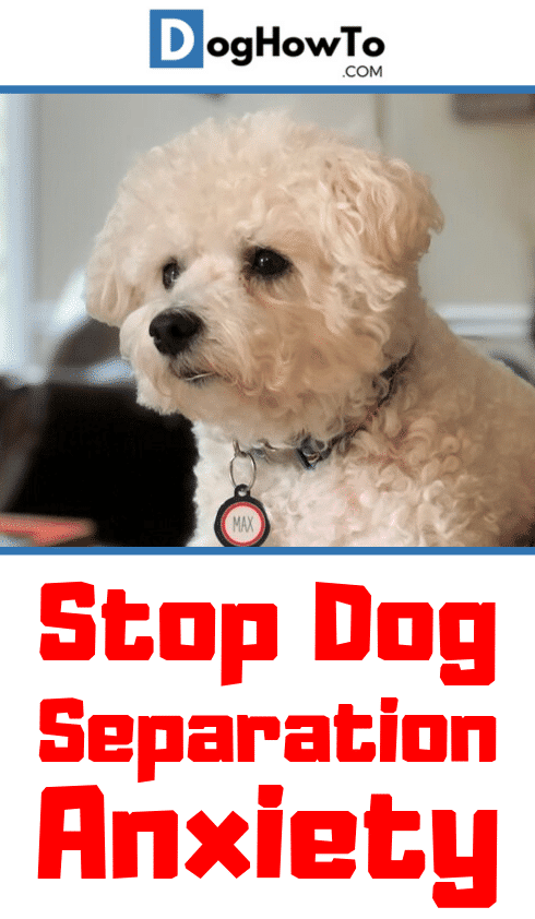 How to stop separation anxiety in dogs. Find out EXACTLY what's going on! Learn the root cause, symptoms, and how to stop dog separation anxiety for good just by reading this article!