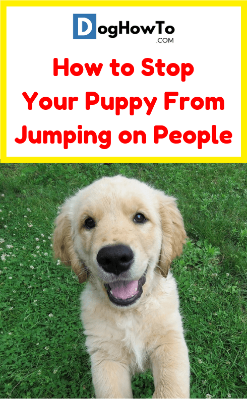 How To Stop Your Puppy From Jumping On People Dog How To