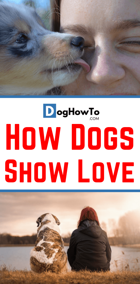 Ways dogs show you love. Find out the 8 things dogs do to show love! Learn why the do it and EXACTLY what to look for, plus more about how dogs show love, all by reading this article!