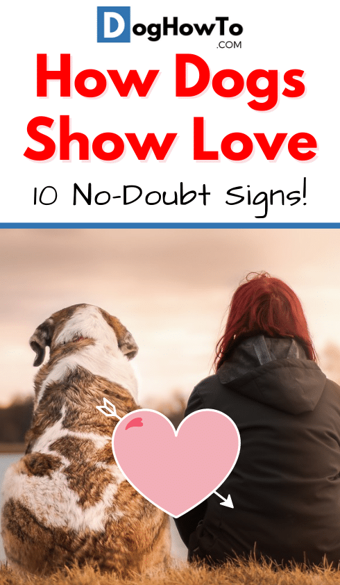 How dogs show love. Learn about all 10 ways that dogs show their love for you! Find out why they're doing it and EXACTLY the signs you should watch for, all in this article!