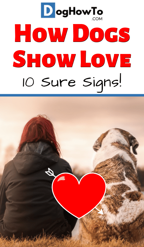How dogs show they love you. Find out the 8 ways that dogs show their love for you! Learn about why the do it and EXACTLY the signs you should be looking for, all just by reading this article!