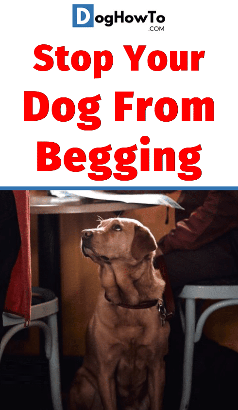 How to get your dog to stop begging. Eat your meals in peace without your dog whining by using these 3 proven ways to train your dog to quit begging! Find out about all 3 just by reading this article!