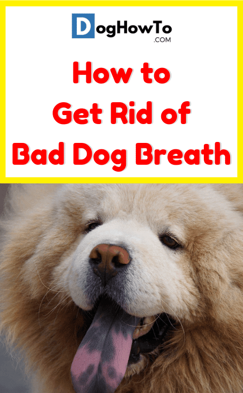 Remedy for bad dog breath
