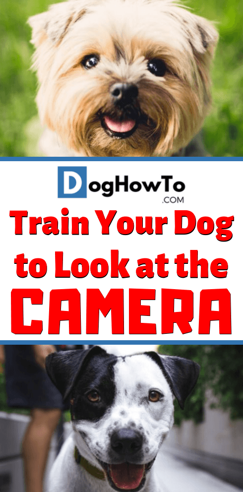 How to get your dog to look at the camera. Take pictures of your dog that you'll cherish forever, by using the 5 easy to follow tips for taking pics of your dog in this article!