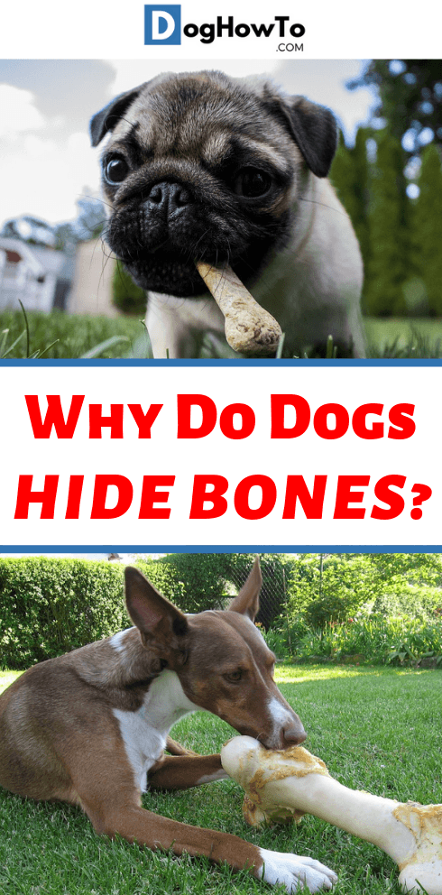 why dogs hide bones