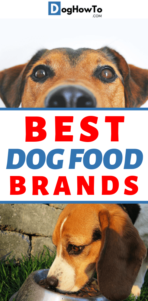 best brands of dog food