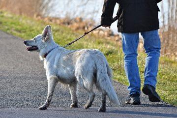 dog pulling on leash tips