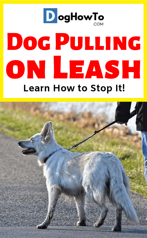 Dog keeps pulling on leash? Use these 4 proven tips for walking your dog. Learn why your dog pulls on the leash, and exactly how to stop it, all just by reading this article!