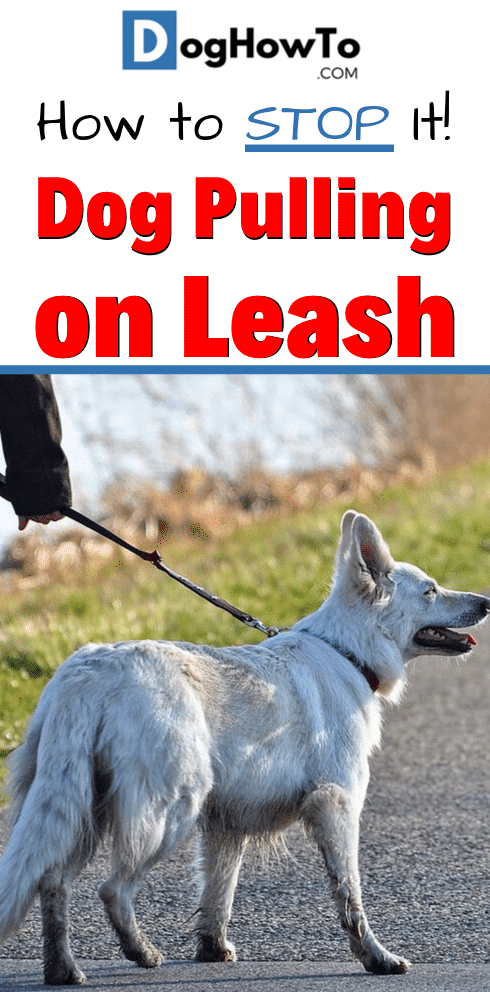 Stop your dog from pulling on the leash! Follow these 4 tips to stop your dog from pulling on their leash. Learn why dogs pull on the leash, and exactly how to stop it, all just by reading this article!