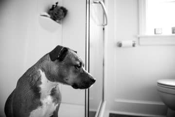 why do dogs follow you to the bathroom?
