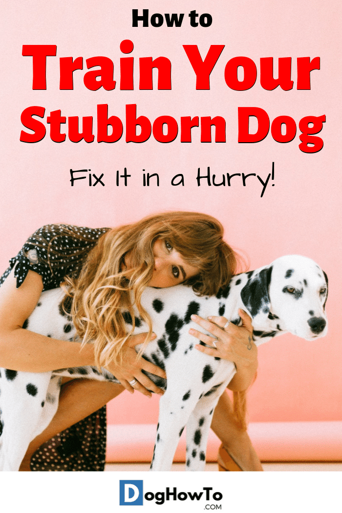 How to train a stubborn dog. Find out the root cause behind your dog acting dominant towards you, and find out how to teach your stubborn dog obedience the easy way by reading this article!
