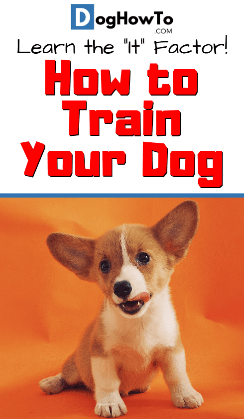 How to train dog obedience by learning the ONE root cause of all your dog's misbehavior! Solve it now if you ever want to make any progress. Find out all you need to know about dog training by reading this article!