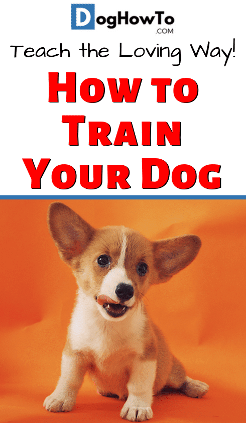 How to train dog to be obedient by learning the ONE root cause of all your dog's misbehavior! Figure it out now if you ever want to make any progress. Find out all you need to know about training your dog by reading this article!