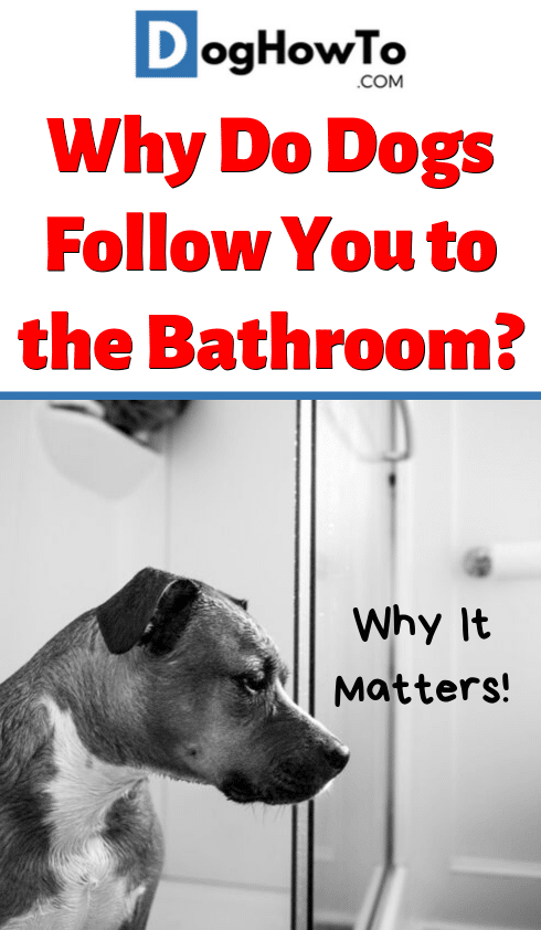 Why do dogs follow you to the bathroom? Find out why they do it, and why it might actually be a very serious issue! Learn what you should do and what to look for, all in this article!