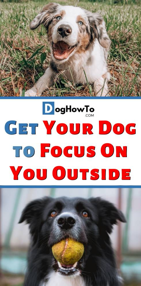 How to Get Your Dog to Focus On You Outside