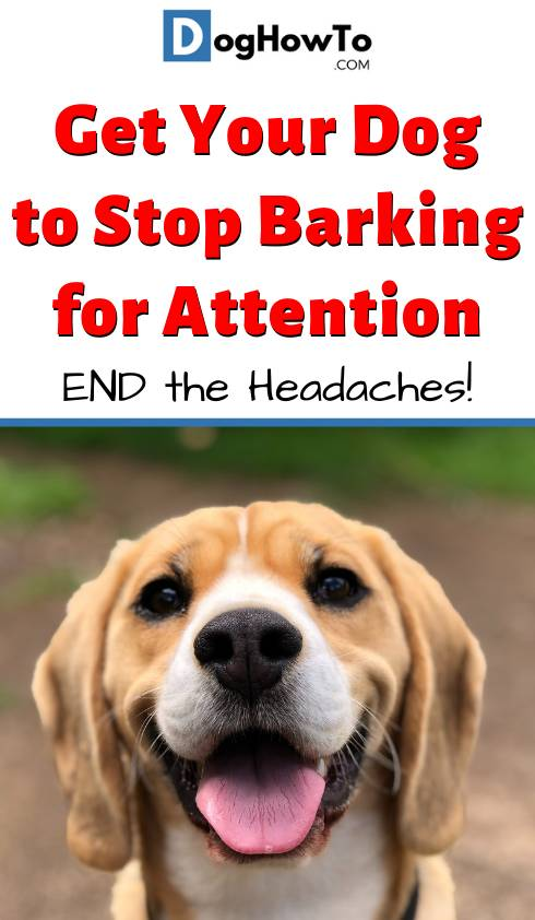 How to Get Your Dog to Stop Barking for Attention