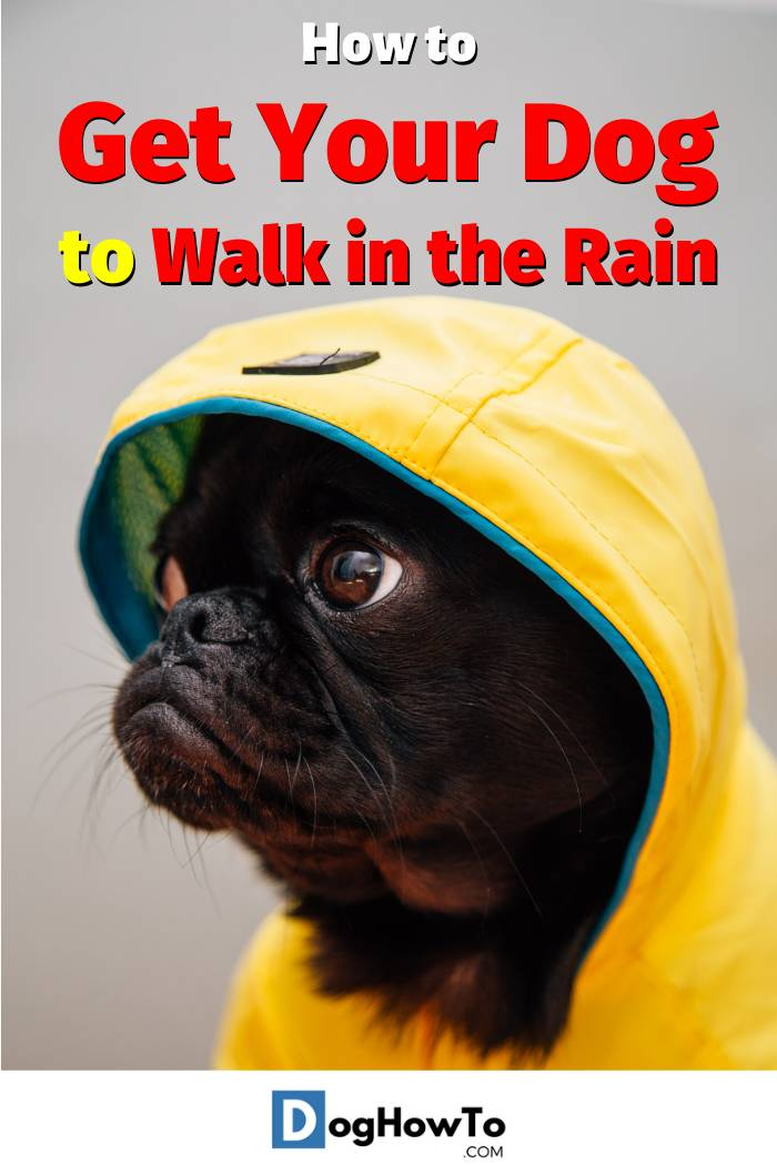 How to Get Your Dog to Walk in the Rain