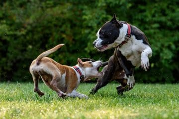How to Stop a Dog from Snapping at Other Dogs